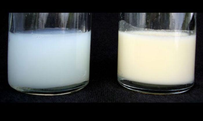 Առաջնային և հետին կաթ